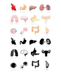 Organs clip art 25 high resolution png human organs by 41Bus