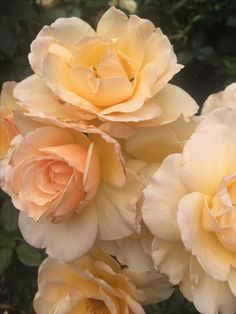Gorgeous golden, apricot and pink tones.