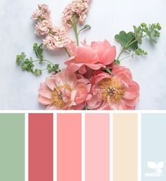 Explore Design Seeds color palettes by collection. Colour Pallette, Color Palate, Colour Schemes, Color Combos, Design Seeds, Palette Pantone, Flora Design, Color Harmony, Color Swatches