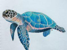 Sea Turtle | Colored Pencil on paper | ElizabethHudy | Flickr