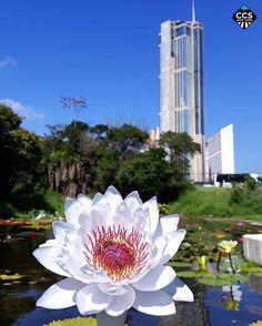 Te presentamos la selección del día: <<NATURALEZA>> en Caracas Entre Calles. ============================  F E L I C I D A D E S  >> @paparazzi0212 << Visita su galeria ============================ SELECCIÓN @mahenriquezm TAG #CCS_EntreCalles ================ Team: @ginamoca @huguito @luisrhostos @mahenriquezm @teresitacc @marianaj19 @floriannabd ================ #naturaleza #nature #Caracas #Venezuela #Increibleccs #Instavenezuela #Gf_Venezuela #GaleriaVzla #Ig_GranCaracas #Ig_Venezuela…