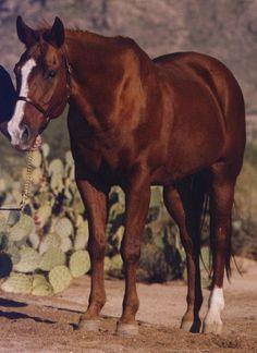 chestnut quarter horse