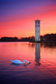 Swan Lake Sunset - Greenville, South Carolina