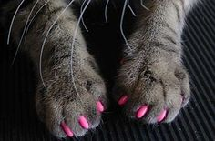 Soft claws nail caps are an 'attractive' and humane alternative to declawing your cat. Developed by a veterinarian, Soft Claws are vinyl nail caps that glue on to your cat's claws. The nail caps cover. I Love Cats, Cute Cats, Funny Cats, Crazy Cat Lady, Crazy Cats, Bad Cats, Cat Claw Covers, Game Mode, Pet Dogs