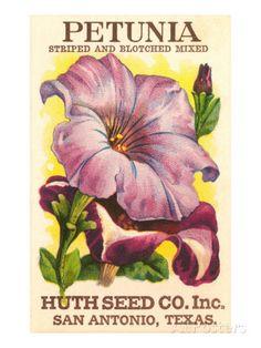 Petunia Seed Packet - vintage