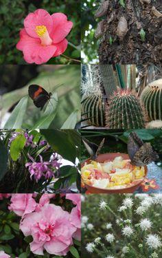 Botanischer Garten #Muenchen #munich #Bavaria