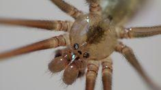 Com a ajuda de um spray de grafeno, aranhas produziram teias 3,5 vezes mais fortes!