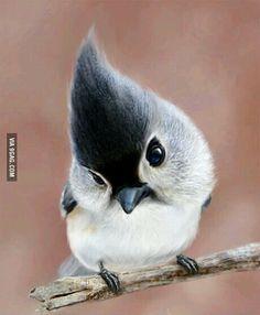 Super cute tufty bird