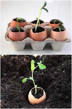 Utilisez des coquilles d'oeufs pour faire pousser des graines: