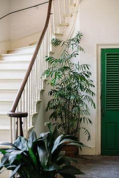 Plants In The Entryway ( indoor palm tree) Indoor Plants