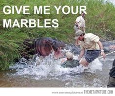 A little Hungry, Hungry Hippos humor. Funny Shit, Haha Funny, Funny Dogs, Funny Stuff, Funny Things, Funny Memes, Awesome Stuff, Random Stuff, Funniest Jokes