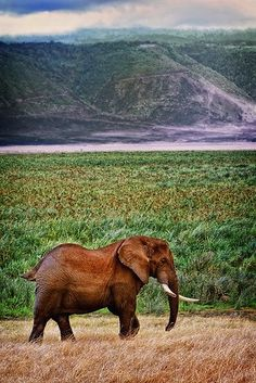 Elephant photographed by Scot Ward @ Ngorongoro Crater Conservation Area in Tanzania.