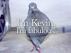 Yeah...I'm fabulous ! What ya gonna do about it?