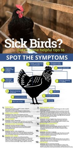 Here's some helpful tips to spot the symptoms Chicken Garden, Chicken Life, Backyard Chicken Coops, Chicken Coop Plans, Building A Chicken Coop, Diy Chicken Coop, Chicken Runs, Raising Backyard Chickens, Keeping Chickens