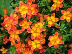 Zahradnictvi Weiss :: Rodinné zahradnictví v Oticích Orange, Plants, Red, Plant, Planets
