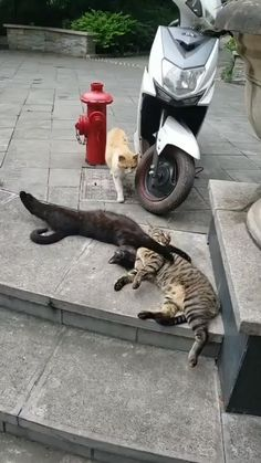 This was really funny to watch funny cats funny cat memes funny cartoons funny cat pictures funny cat videos Cats Funny Funny Cats Cute & Funny Cats Funny Cat Funny Cat Funny Cats Funny Animal Videos, Cute Funny Animals, Funny Animal Pictures, Animal Memes, Cute Baby Animals, Funny Cute, Cute Cats, Funny Videos, Cute Animal Humor