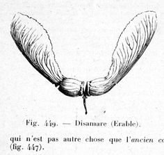 Disamare d'érable. (Pizon Antoine, 1930. <i>Précis d'histoire naturelle.</i> Lib. Octave Douin ed., 622 p., p. 579) Maple Seed Tattoo, Woodcut Tattoo, Under My Skin, Wood Burning Art, Seed Pods, Body Mods, Botanical Art, The Magicians, Tattoo Inspiration
