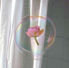 flower in a bubble