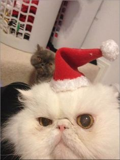 This showed up on my newsfeed today. Merry Christmas. cute cats