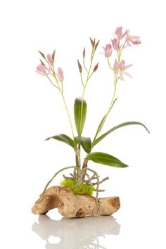 Lilac Dendrobium Orchid in Natural Wood by Treemasters