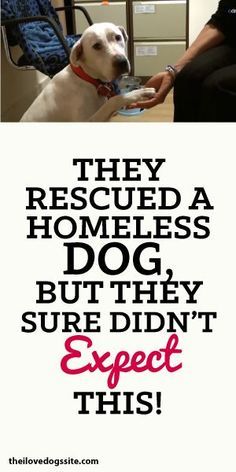 They Rescued A Homeless Dog But They Sure Didn't Expect This!!