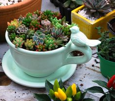 succulents and bird