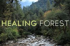 Nature has incredible healing power. Let this short video draw you through spectacular wilderness. Feel your stresses melt away.