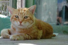 MAX - Gato adoptado - AsoKa el Grande