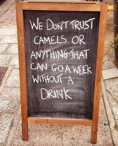 Do Not Be a Camel. Come in and see us so we can keep trusting you.