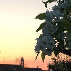 #albarunner #run #morning #triathlon #roadtosirmione #swimbikerun #campanile : @tampel77