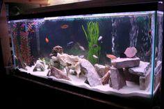 Cichlid Aquarium Decorations