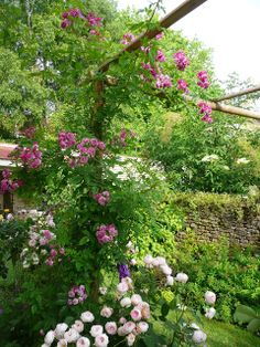 Notre jardin secret... BLEU MAGENTA.