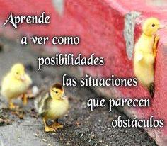 obstáculos y posibilidades...