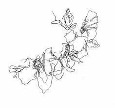 Bluebells, Spring flowers continued line drawing by Louise Taylor [textile designer]