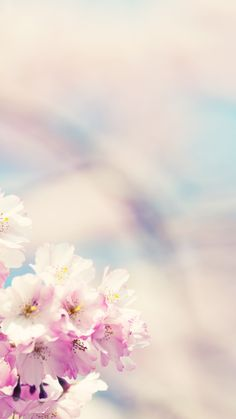 Free Spring Flower Phone Wallpapers Backgrounds - Rebeah Bailey