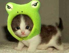 śmieszne koty 3 #funnycat #funny #cat #humor