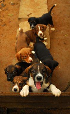 bunch 'o cuties   photo via flickr: marusland2011