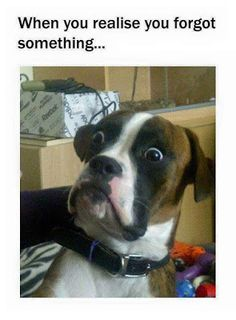 If you want to laugh and you have not a best list of memes. Don't worry, we collected some funny stuff memes that can do this and have a great memes.Read this Top 25 funny stuff memes Top 25 … Humor Animal, Animal Memes, Animal Quotes, Animal Mashups, I Love Dogs, Puppy Love, Cute Dogs, Adorable Puppies, Funny Animal Pictures