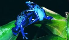 Check out the top poisonous animals