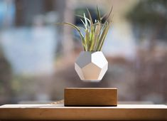 Unlike any pot you likely own, this Lyfe planter from Flyte levitates. With a base made from oak, ash and walnut, the 12-sided planter hovers above—with no strings, devices or stands connecting the two. Magic, art, science and nature collide in this clever creation.