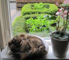 Pien, lekker warm op de vensterbank