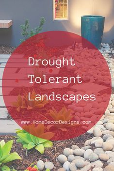Easy Desert Landscaping Tips That Will Help You Design A Beautiful Yard Drought Resistant Landscaping, Drought Tolerant Landscape, Landscaping Plants, Arizona Landscaping, Succulent Landscaping, Landscaping Ideas, Landscape Curbing, Desert Landscape, Landscape Design