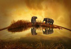 Thailand, Elephant, Sunset, Nature, Pets