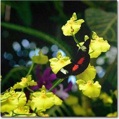 Trademark Fine Art Doris Longwing Butterfly on Orchid Canvas Art by Kurt Shaffer, Size: 14 x 14, Multicolor