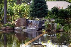 Natural swimming pool pond photo gallery design fabrication services total habitat - The pond house nature above all ...