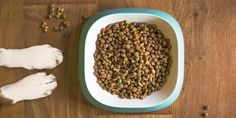 "Shamontiel wrote ""Top 15 Best Legume Free Dog Foods Reviewed in [2020]"""