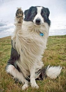 High-paw! Aw come on, school is out buddy- no need to raise your hand! Just blurt out the answer