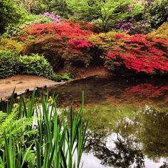 19. Beautifully manicured gardens at Isabella Plantation in Richmond, Greater London. #VisitLondon