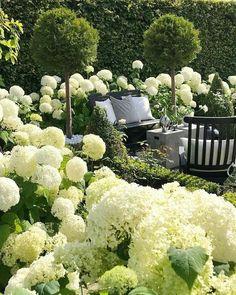 Garten deko ideen - Thank you for sharing my Hydrangea garden Welcome to all . White Gardens, Garden Care, Front Yard Landscaping, Landscaping Ideas, Dream Garden, Garden Planning, Garden Projects, Garden Inspiration, Style Inspiration