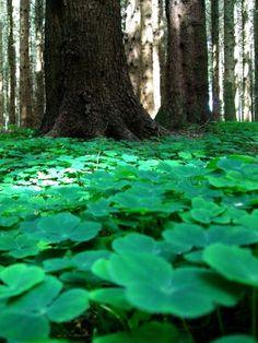 Forest Floor, Westmeath, Ireland